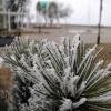 Причудливые узоры Бердянской зимы...