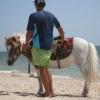 На Бердянской Косе детям предложат покататься на симпатичном пони...