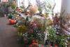 Бердянский городской клуб садоводов-огородников им. Я.И. Левина