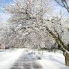 В Бердянском парке им. П.П.Шмидта зимой...