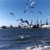 Чайки над Бердянским заливом...